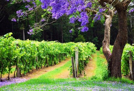 Bago Vineyards - Accommodation Gold Coast