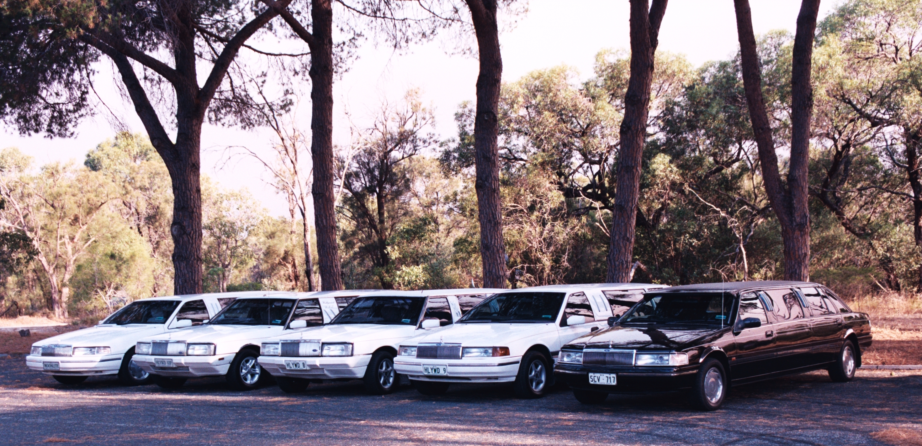 Hollywood VIP Limousines - Accommodation Gold Coast