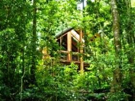 Fur'N'Feathers Rainforest Tree Houses - Accommodation Gold Coast