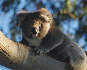 Bimbi Park Camping Under Koalas - Accommodation Gold Coast