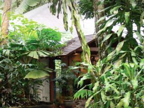 Heritage Lodge and Spa - In the Daintree - Accommodation Gold Coast