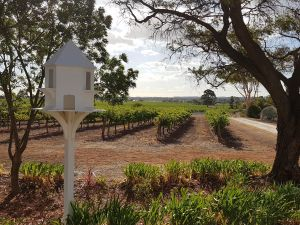 'In The Vines' Guest Cottage - Accommodation Gold Coast