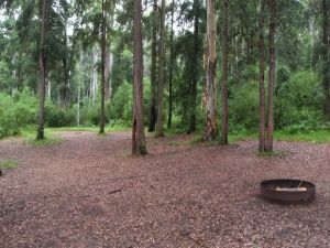 Murphys Glen campground - Accommodation Gold Coast