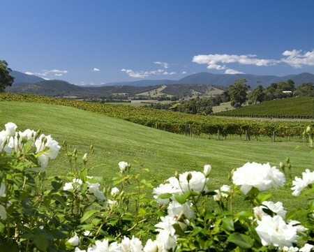 Balgownie Estate Vineyard Resort and Spa - Accommodation Gold Coast