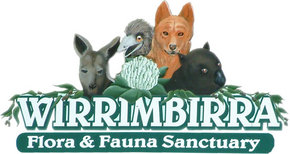 Wirrimbirra Sanctuary - Accommodation Gold Coast