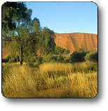 Uluru - Kata Tjuta National Park - Accommodation Gold Coast