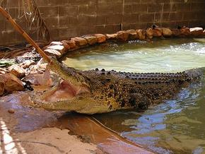 Wyndham Zoological Gardens and Crocodile Park - Accommodation Gold Coast