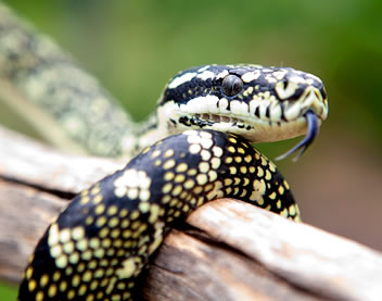 Reptile Encounters - Accommodation Gold Coast