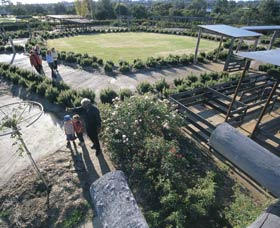 Kojonup Rose Maze - Accommodation Gold Coast