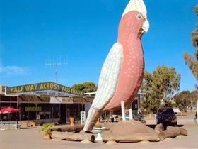 The Big Galah - Accommodation Gold Coast
