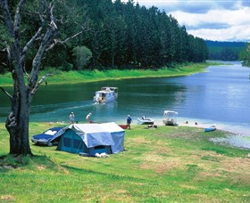 Danbulla National Park and Danbulla State Forest - Accommodation Gold Coast
