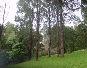 Mount Dandenong Arboretum - Accommodation Gold Coast