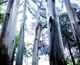 Dandenong Ranges National Park - Accommodation Gold Coast