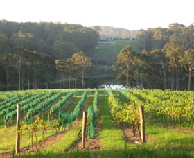 Tilba Valley Wines - Accommodation Gold Coast