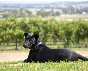 Moothi Estate Vineyard and Cellar Door - Accommodation Gold Coast