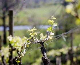 Barrgowan Vineyard - Accommodation Gold Coast