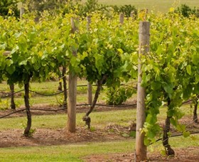 Mt Coghill Vineyard - Accommodation Gold Coast