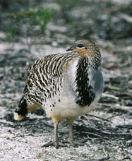 Yongergnow Australian Malleefowl Centre - Accommodation Gold Coast