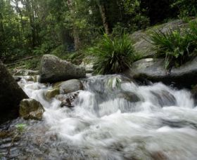 Washpool National Park - Accommodation Gold Coast