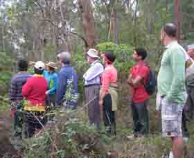 Boronia Tours - Accommodation Gold Coast