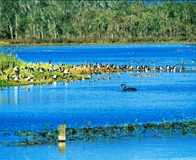 Hasties Swamp National Park - Accommodation Gold Coast