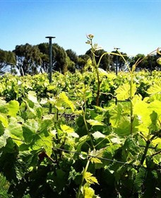 Basalt Wines - Accommodation Gold Coast
