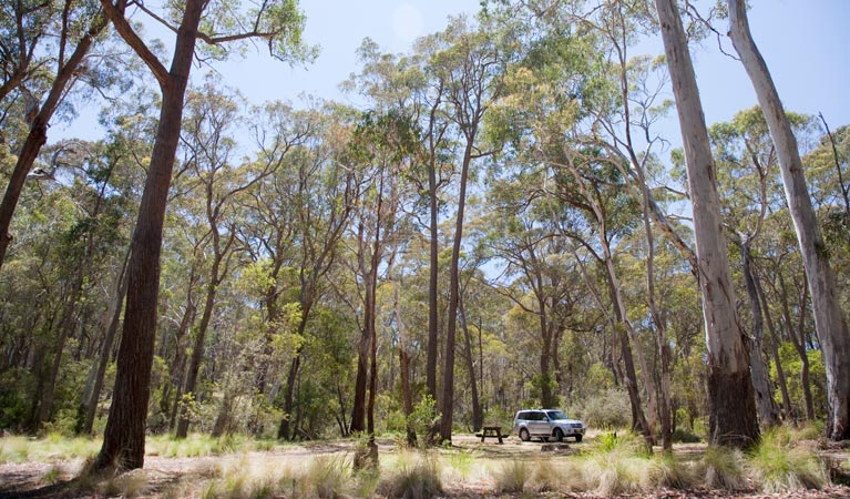 Coolah Tops National Park - Accommodation Gold Coast