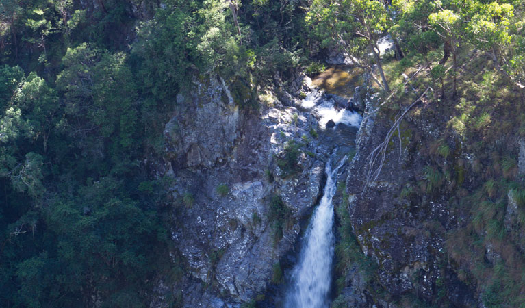 Lyrebird Falls walking track - Accommodation Gold Coast