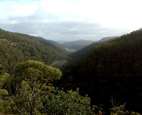 Nattai Gorge Lookout - Accommodation Gold Coast
