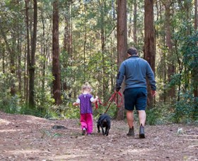 Olney State Forest - Watagan Mountains - Accommodation Gold Coast