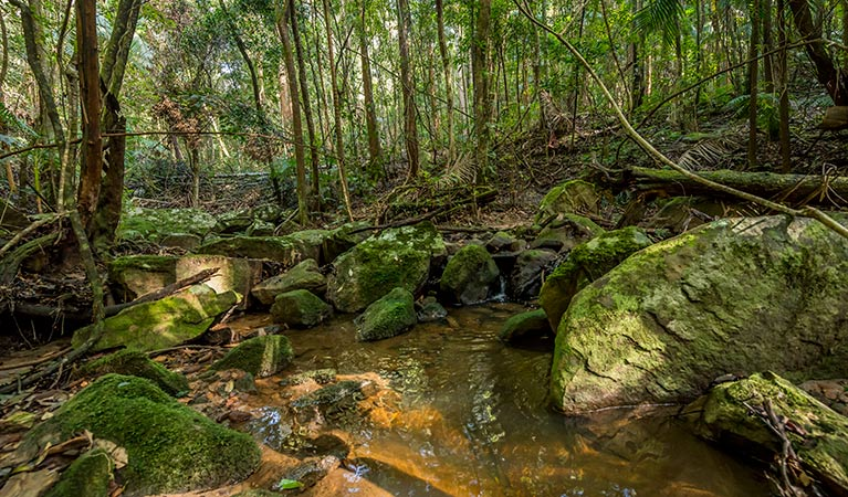 Palm Grove Nature Reserve - Accommodation Gold Coast