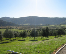 Hastings Valley Olives - Accommodation Gold Coast