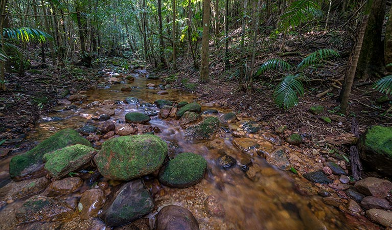 Starrs Creek picnic area - Accommodation Gold Coast