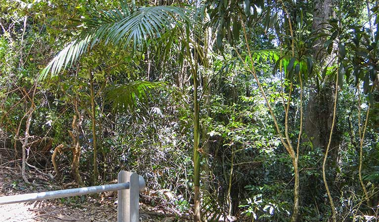 Goorgana walking track - Accommodation Gold Coast