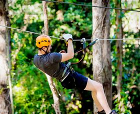 TreeTop Challenge Currumbin - Accommodation Gold Coast