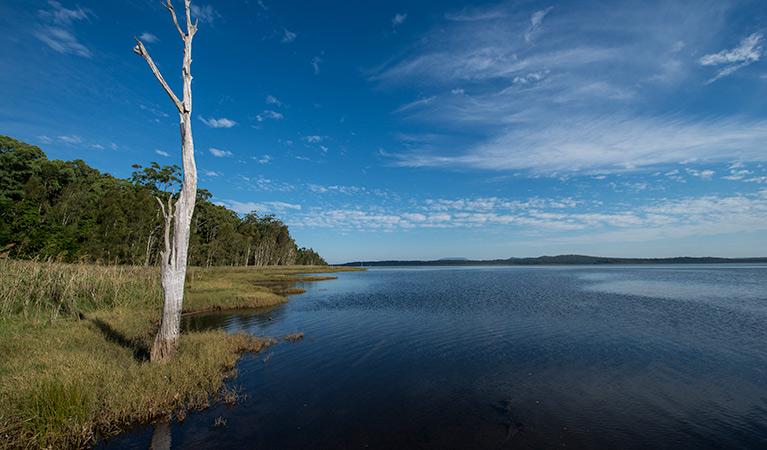 Lake Innes Nature Reserve - Accommodation Gold Coast