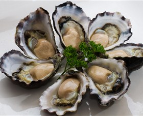 Tathra Oysters - Accommodation Gold Coast