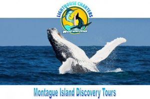 Lighthouse Charters Narooma - Accommodation Gold Coast