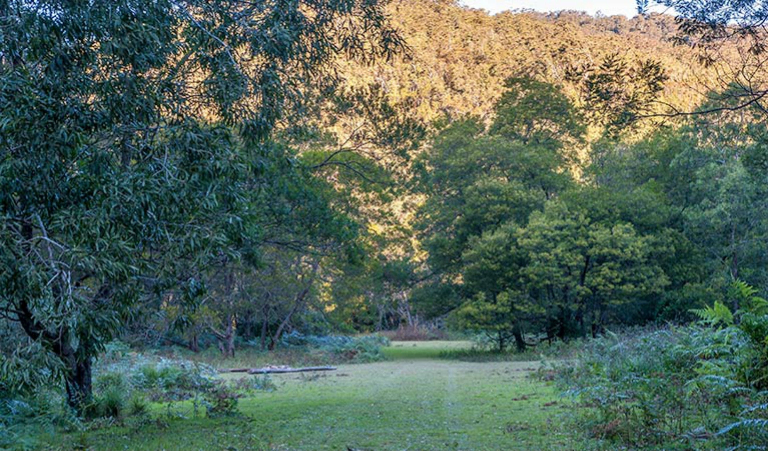 Griffins walking track - Accommodation Gold Coast