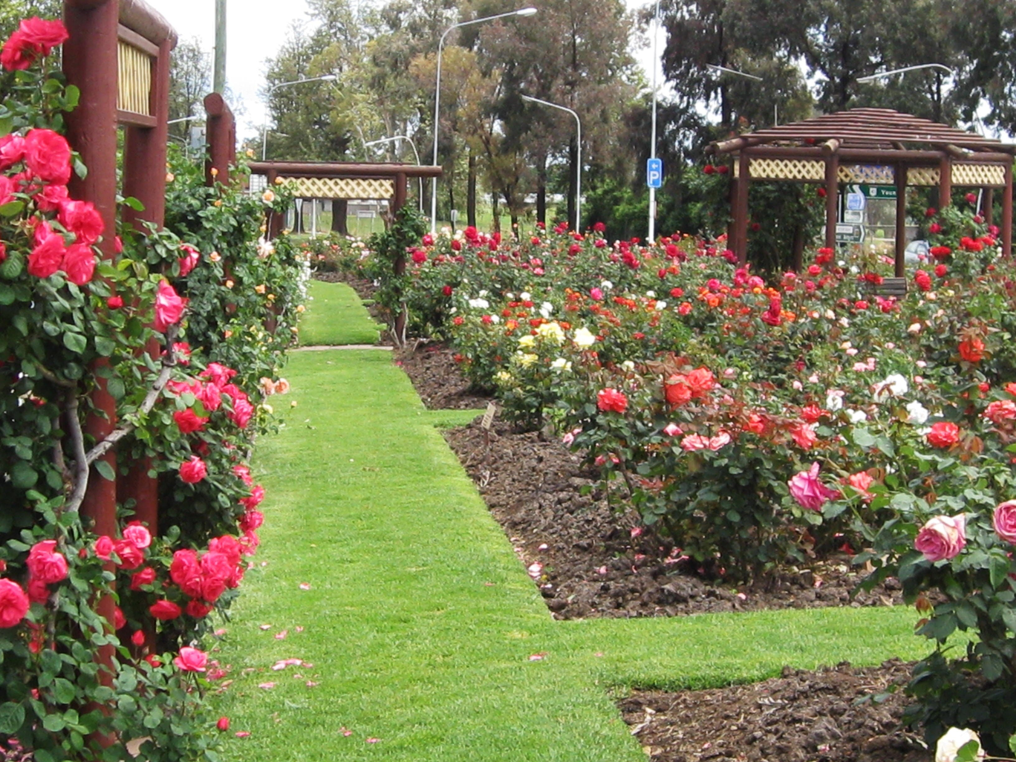 Cowra Rose Garden - Accommodation Gold Coast