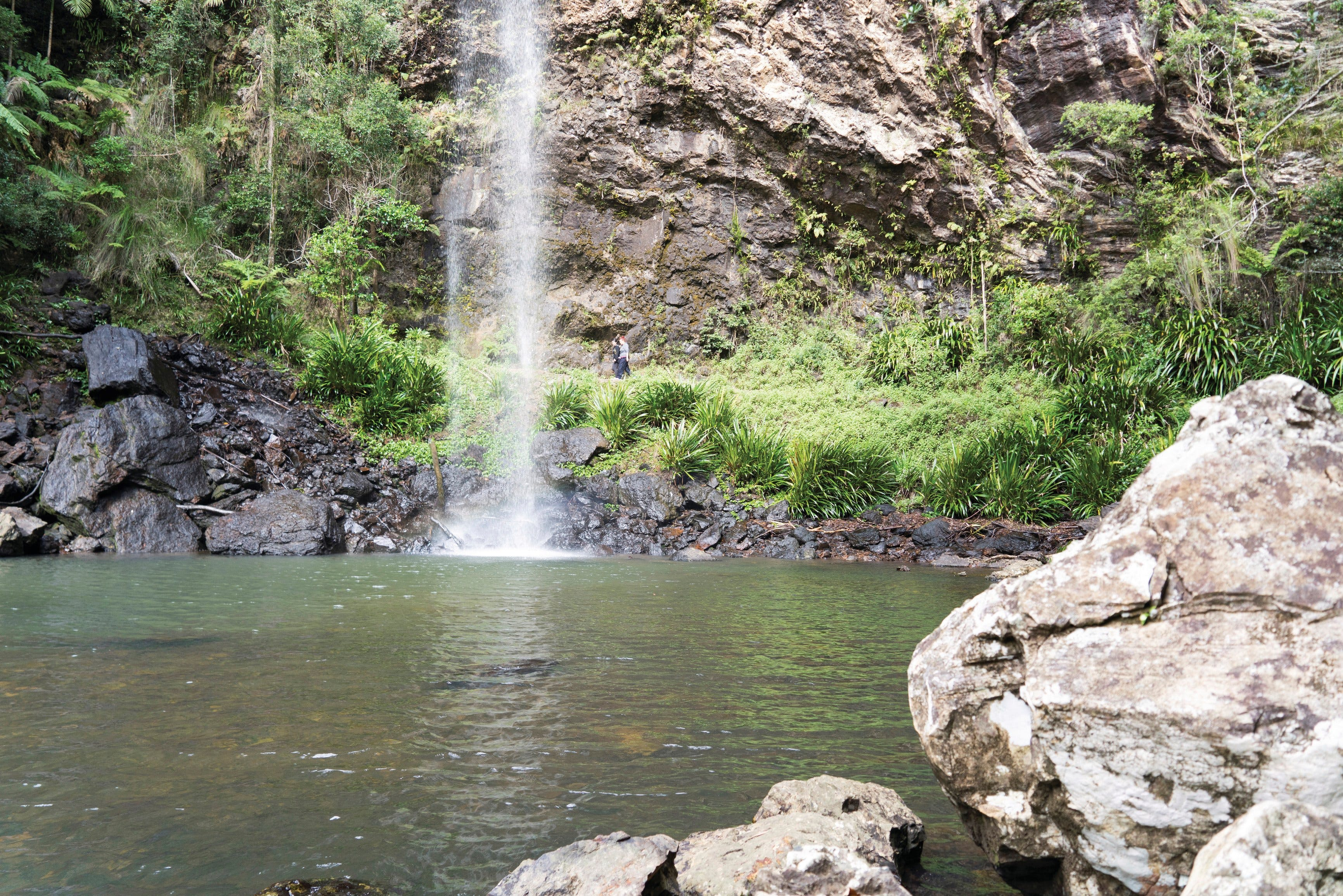 Twin Falls Circuit Springbrook National Park - Accommodation Gold Coast