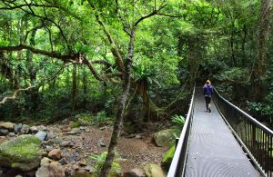 Rainforest Loop Walk Budderoo National Park - Accommodation Gold Coast