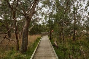 The Briars Park Walking Trails - Accommodation Gold Coast