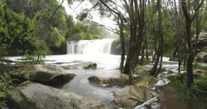 Nellies Glen Carrington Falls - Accommodation Gold Coast