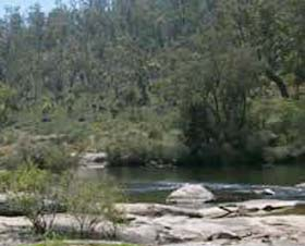 Wellington Discovery Forest - Accommodation Gold Coast
